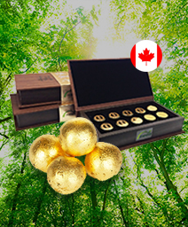 캐나다 무방부제 공진단 10환